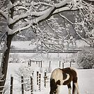Paint in the Snow by Lori Deiter