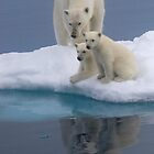 Polar Reflections by Steve Bulford