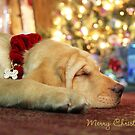 Merry Christmas from Lily by Lori Deiter