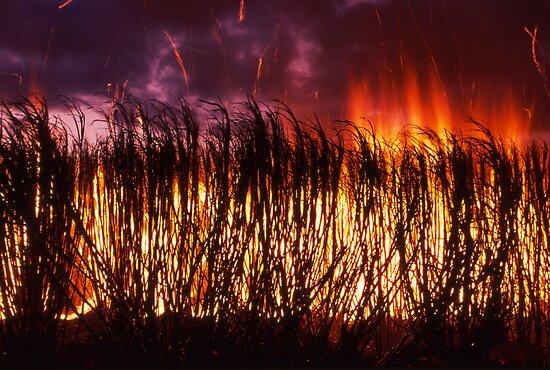 sparks fly - cane firing near Ayr, Nth Qld. by Tony Middleton