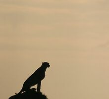The Lookout by Steve Bulford