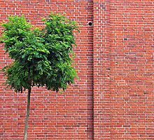Red Bricks on a wall by Ron Zmiri