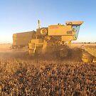 Looking for Grain -- Harvest 2007 by langar