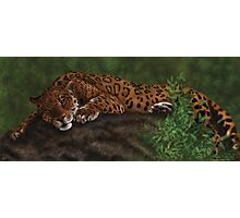 Lazy Leopard Photographic Print