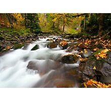 Autumn Passages Photographic Print