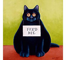 Fat Cat Photographic Print