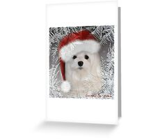 Snowdrop the Maltese - A Frosty Morning ! Greeting Card