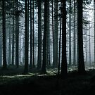 Mystery forest by Hudolin