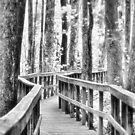 A Walk in the Woods by photomama4
