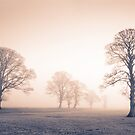 Tywi Valley Trees 2 by Hywel Harris