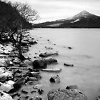 Loch Rannoch Shoreline by PigleT