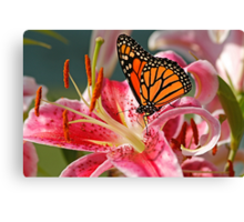 Monarch Butterfly on a Stargazer Lily Canvas Print