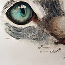 The eye by Penny Edwardes