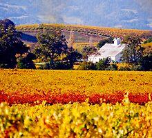 Napa Winery by Michael D'Andrea Diaz