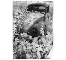 Talybont Beetle Poster