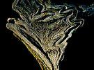 Natural art by Patrick Morand
