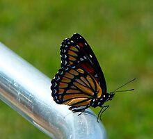 Monarch On The Walker by WildestArt