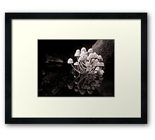 Casting Graceful Reflections Over The Silent Water Framed Print