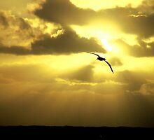 Albatross Sunset by Doug Thost