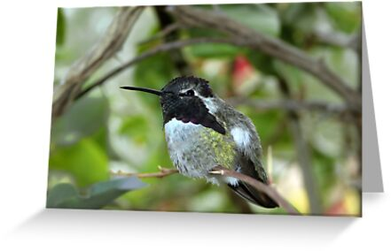 Little Hummer by Daniel J. McCauley IV