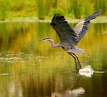 Heron Liftoff by Ken Haley