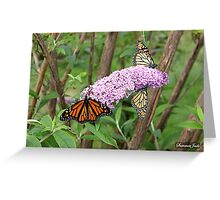 Migration of the Monarch Butterfly  Greeting Card