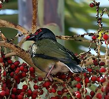 Berries for Breakfast by Lesley Smitheringale