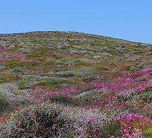 pink hills by carlyetc