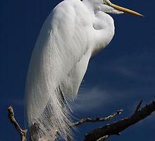 Egret by Scarlett