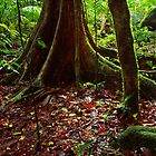 Mossman Gorge, Tropical Queensland by Matt  Lauder