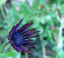 Pretty Purple Picture by Sharon Perrett