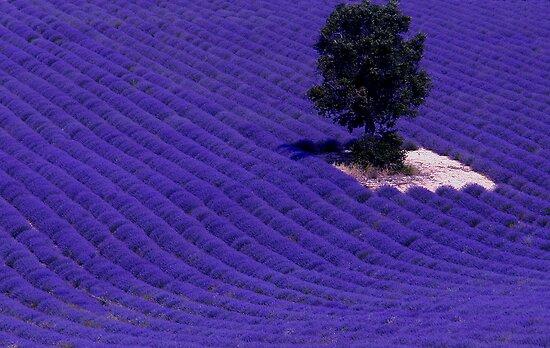 Blue field Flat,550x550,075,f
