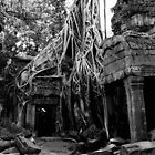 Ta Prohm  by Bern