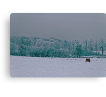 Winter's day Canvas Print
