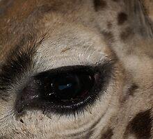 I've got my eye on you! by Deborah  Bowness