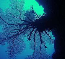 Sea Fan by blew12bandit