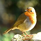 """"""" December Robin """" by Richard Couchman"""