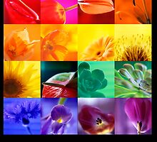 Rainbow Flowers by Elaine Batton