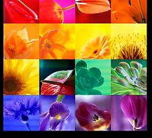 Rainbow Flowers by Elaine Batton