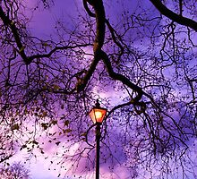 Tree Light by Joanna Clark
