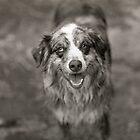 Dog 1 by jalexanderart
