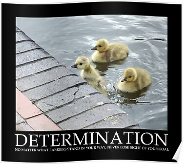 Determination by Mark Wilson