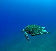 gren turtle by bashta