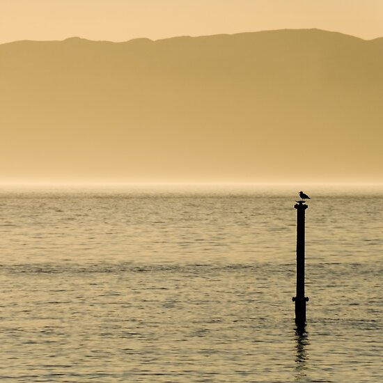 Seagull by Lou McGill