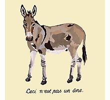 This is not a donkey Photographic Print