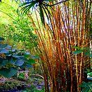Waimea Falls Park.4 by karolina