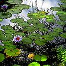 Waimea Lily Pads by karolina