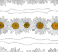 Daisy Chains on Bright Mint Sticker