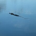Alligator on the move by endomental