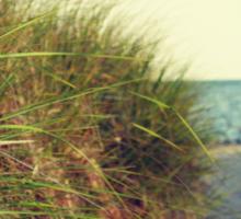 Lake Michigan dune grass Sticker